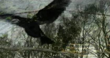 raven animation
