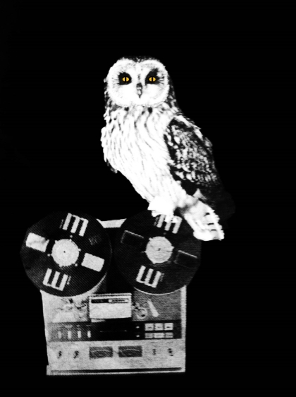 owl hauntological edit crop