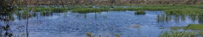 beeliar-wetlands-2